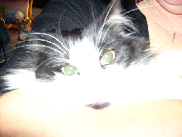 Diddyman Dod Our beautiful Kitten she is still with us today
